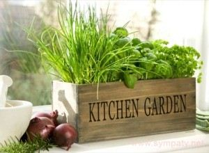 Growing Herbs Indoors For Beginners  DIY Home Tips